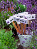 Lavender Stakes with Names and Lavender in Pots  Washington  USA