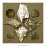 Shell Collector Series III