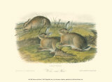 Wormwood Hare