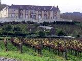 Chardonnay and Pinot Noir Grape Vineyards
