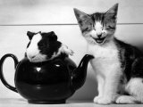 Pinkie the Guinea Pig and Perky the Kitten Tottenahm London  September 1978
