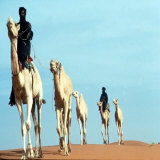 Mali Tribesman Sits on Camel  1987