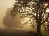 Matin d'automne, près de Dryman, Stirling, Ecosse Papier Photo