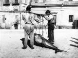 Two Men Carrying a Freshly-Caught Tuna Palermo