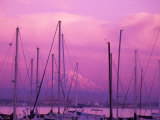 Elliot Bay Marina with Mount Rainier at Sunset  Seattle  Washington  USA