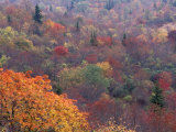 Autumn color in the Great Smoky Mountains National Park  Tennessee  USA
