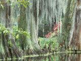 Charleston  South Carolina  USA