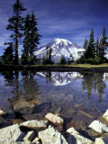 Mt Rainier Reflected in Tarn  Mt Rainier National Park  Washington  USA