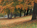 Maples and Bench in Autumn at Greenlake  Seattle  Washington  USA