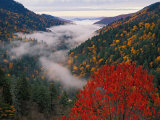 Autumn View of Fog from Morton Overlook  Great Smoky Mountains National Park  Tennessee  USA