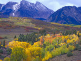 Colorful Aspens in Logan Canyon  Utah  USA