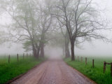 Sparks Lane on Foggy Morning  Cades Cove  Great Smoky Mountains National Park  Tennessee  USA