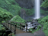 Falls from Foot Trail  Oregon Latourell Falls  Columbia River Gorge  Oregon  USA