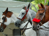 Horses Paraded Before the Race  Saratoga Springs  New York  USA