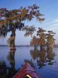Kayak Exploring the Swamp  Atchafalaya Basin  New Orleans  Louisiana  USA
