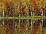 Fall Foliage and Birch Reflections  Hiawatha National Forest  Michigan  USA