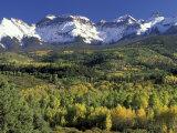 Fall Color and Landscape  Mt Sneffels Wilderness  Colorado  USA