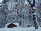 Log Cabin in Snowy Woods  Chippewa County  Michigan  USA