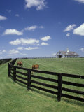 Thoroughbred in the Countryside  Kentucky  USA