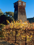Water Tank Tower at the Handley Cellars Winery  Mendocino County  California  USA
