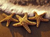 Sunset and Starfish on Surf Line  Maui  Hawaii  USA