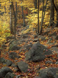 Fall Foliage on the Tarn Trail of Dorr Mountain  Maine  USA