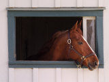 Thoroughbred Race Horse in Horse Barn  Kentucky Horse Park  Lexington  Kentucky  USA
