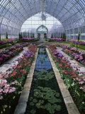 Como Park Conservatory  St Paul  Minnesota  USA