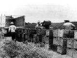 Mexican Farm Laborers