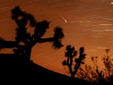 Several Leonids Meteors are Seen Streaking Through the Sky Over Joshua Tree National Park  Calif