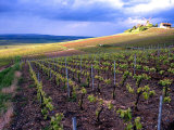 A View of the Champagne Vineyards