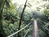 Sky Walk  Monteverde Cloud Forest  Costa Rica
