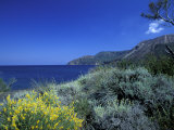 Broom Flowers and the Mediterranean Sea  Sicily  Italy