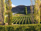 Felton Road Vineyard  Bannockburn  South Island  New Zealand