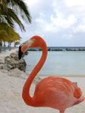 Pink Flamingo on Renaissance Island  Aruba  Caribbean