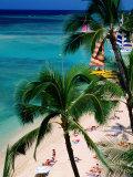 Palm Trees Over Waikiki Beach  Waikiki  USA