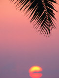 Palm Frond Silhouetted at Sunset  USA