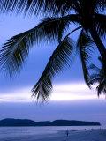 Sunset on Palm Trees Lining Beachfront at Pantai Cenang  Malaysia