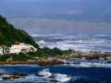 Storm Waves Lash Coast at Island Bay  Wellington  New Zealand