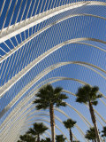 El Ombracle (Walkway / Garden )  City of Arts and Sciences  Valencia  Spain