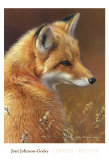 Curious: Red Fox