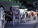 Horsedrawn Carriage at Jackson Square  French Quarter  Louisiana  USA