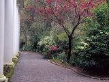 Walkway in Gardens  Magnolia Plantation and Gardens  Charleston  South Carolina  USA