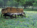 Old Wagon and Wildflowers  Devine  Texas  USA