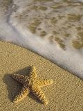 Starfish and Surf of Makena Beach  Maui  Hawaii  USA