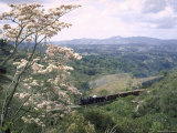 Narrow Gauge Rail Line Transporting Goods Between Guatemala and El Salvador