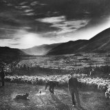 Basque Shepherd  Recent Immigrant from Macaye  France