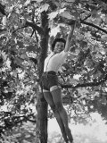 Eartha Kitt Playing in the Tree Aluminium par Gordon Parks