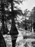 Reelfoot Lake  Tennessee  Showing Stagnant Lake Waters