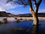 Tree Standing in Frozen Pond with Monadhliath Mountains in Background  Kingussie  United Kingdom